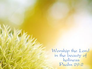 Beauty of Holiness - Backgrounds